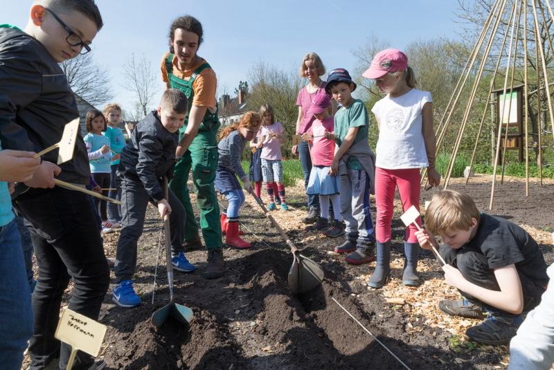 Vom Pflanzen bis zum Ernten Die Bremer Schulklasse nimmt am Kartoffelprojekt im FlorAtrium teil