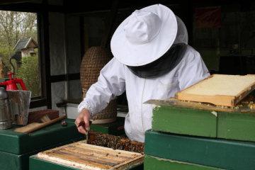 You can watch the members of Bremer Imkerverein von 1875, the local beekeeping society, at work at Lür-Kropp-Hof farm in Bremen-Oberneuland.
